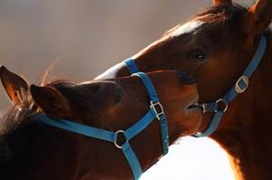 Horses2011019_001
